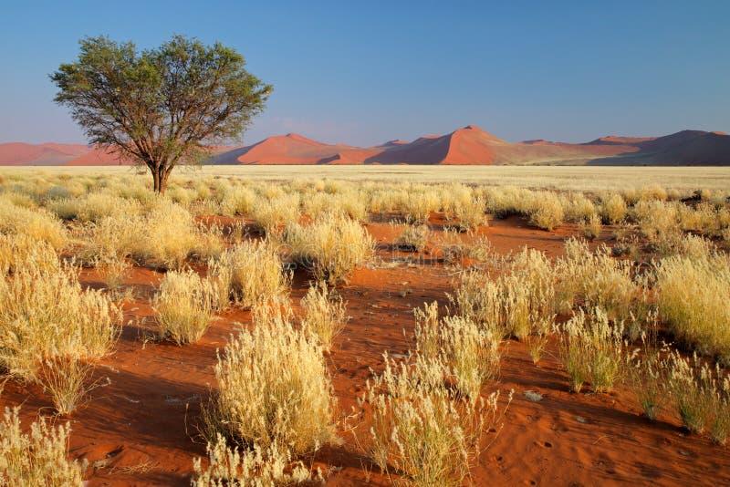 τοπίο Ναμίμπια ερήμων στοκ εικόνες