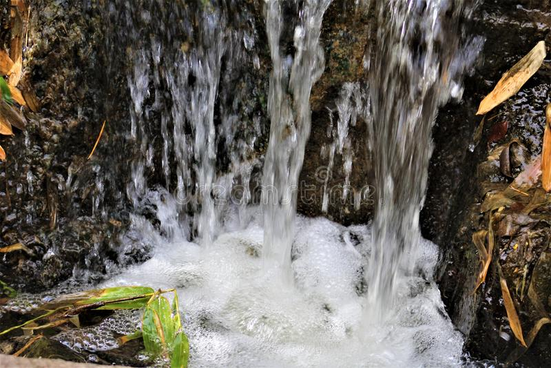 Τοπίο νερού στο ζωολογικό κήπο του Phoenix, κέντρο της Αριζόνα για τη συντήρηση φύσης, Phoenix, Αριζόνα, Ηνωμένες Πολιτείες στοκ φωτογραφίες με δικαίωμα ελεύθερης χρήσης