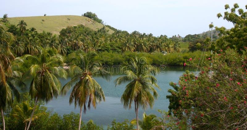 Τοπίο νησιών αγελάδων, Αϊτή στοκ εικόνες