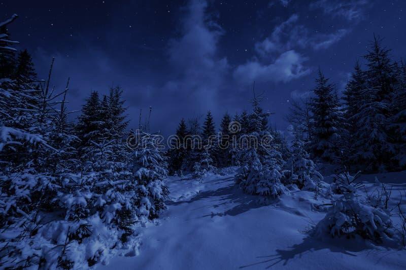 Τοπίο νύχτας στο χειμερινό δάσος στοκ εικόνες