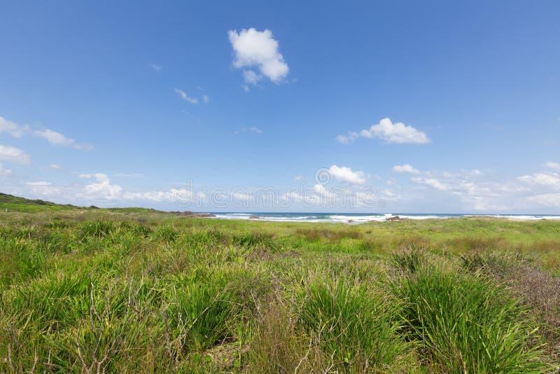Τοπίο παραλιών του Σίδνεϊ στοκ φωτογραφία με δικαίωμα ελεύθερης χρήσης