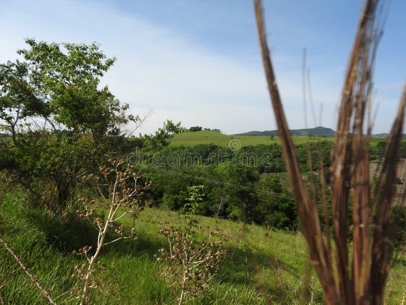 Τοπίο πιό florest στοκ εικόνες