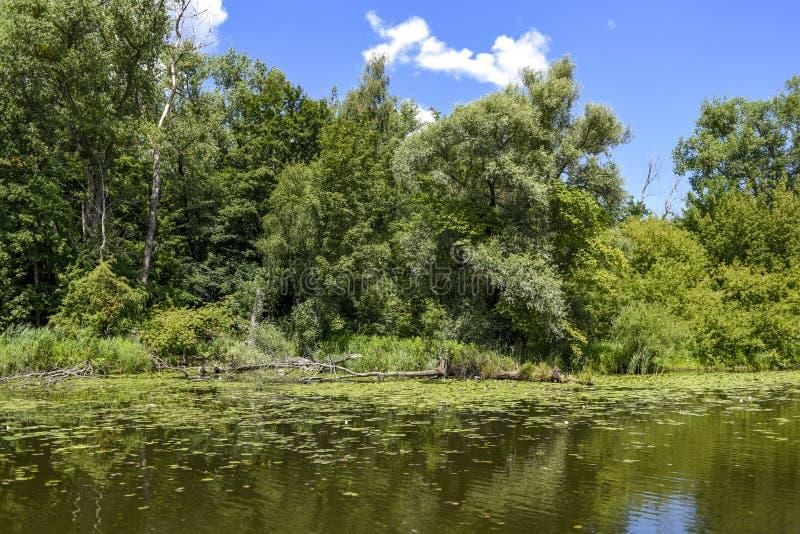 Τοπίο ποταμών, πρασινάδα από το νερό στοκ εικόνες