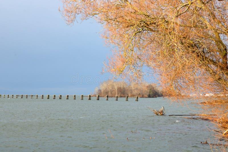 Τοπίο ποταμών χειμερινού Fraser στοκ φωτογραφία με δικαίωμα ελεύθερης χρήσης