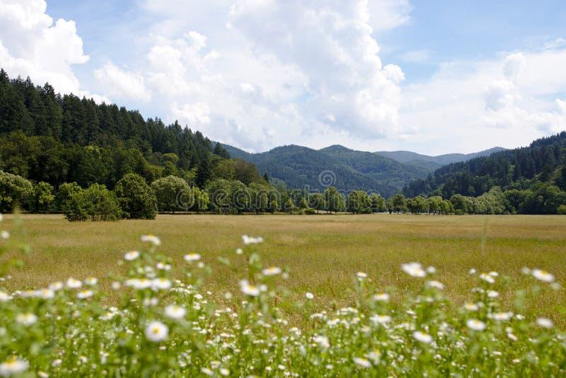 Τοπίο που πυροβολείται των πράσινων λόφων του μαύρου δάσους, Γερμανία στοκ φωτογραφία