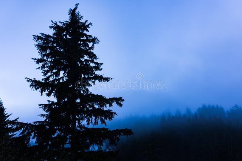Τοπίο πρωινού της Misty των αειθαλών δέντρων στοκ φωτογραφία με δικαίωμα ελεύθερης χρήσης