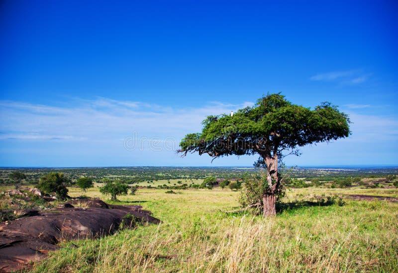 Τοπίο σαβανών στην Αφρική, Serengeti, Τανζανία στοκ φωτογραφία με δικαίωμα ελεύθερης χρήσης
