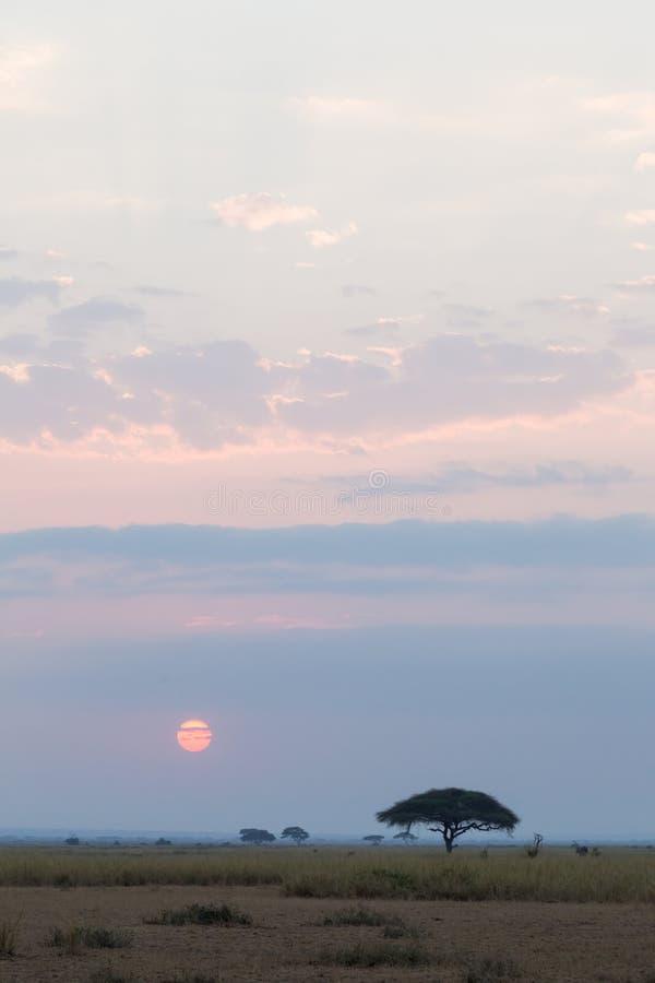 Τοπίο στη σαβάνα Amboseli Κένυα, Αφρική στοκ εικόνες με δικαίωμα ελεύθερης χρήσης