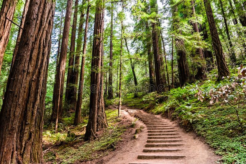 Τοπίο στο εθνικό μνημείο ξύλων Muir στοκ εικόνες