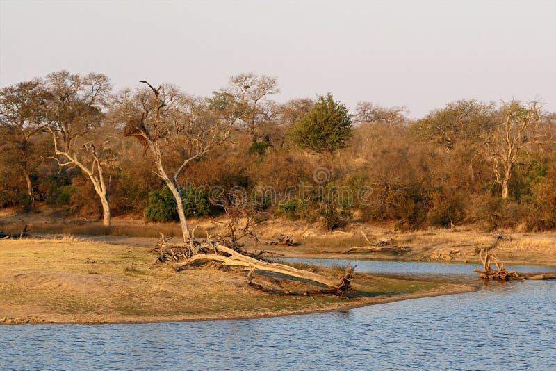 Τοπίο στο εθνικό πάρκο Kruger με την άγρια φύση του τέλεια για τα σαφάρι τον Αύγουστο, Νότια Αφρική στοκ φωτογραφία με δικαίωμα ελεύθερης χρήσης