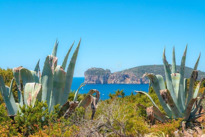 Τοπίο της ακτής Capo Caccia, στη Σαρδηνία στοκ φωτογραφία με δικαίωμα ελεύθερης χρήσης