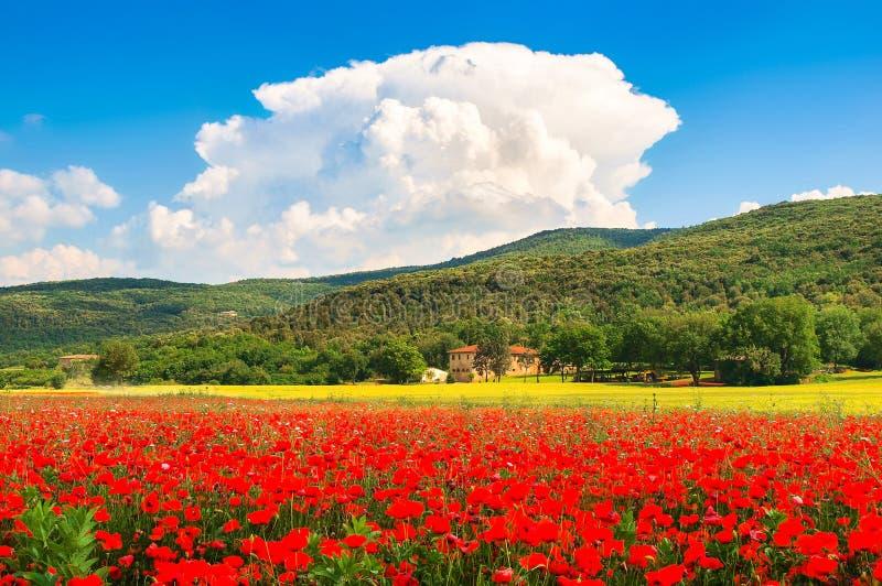 Τοπίο της Τοσκάνης με τον τομέα των κόκκινων λουλουδιών παπαρουνών και του παραδοσιακού αγροτικού σπιτιού στοκ φωτογραφίες με δικαίωμα ελεύθερης χρήσης