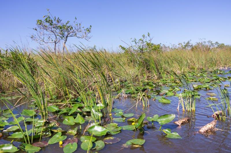 Τοπίο της Φλώριδας Everglades στοκ φωτογραφία με δικαίωμα ελεύθερης χρήσης
