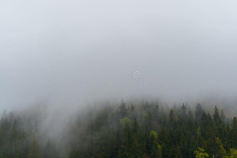 Τοπίο της Misty με το δάσος έλατου στο εκλεκτής ποιότητας αναδρομικό ύφος hipster Καρπάθιο κομψό δάσος της Misty στο πρώιμο ελατή στοκ φωτογραφία