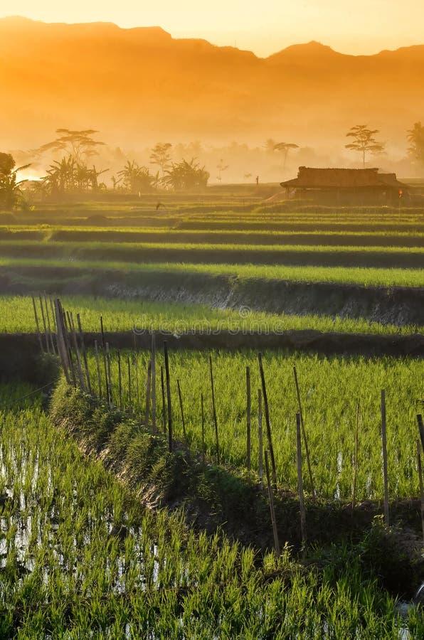 Τοπίο 01 τομέων ρυζιού γεωργίας στοκ φωτογραφία με δικαίωμα ελεύθερης χρήσης