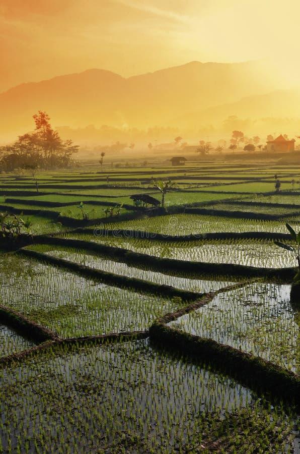 Τοπίο τομέων ρυζιού γεωργίας στοκ φωτογραφίες