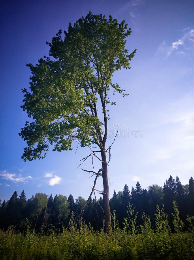τοπίο τοπίων του μόνου δέντρου στάσεων στον τομέα χλόης στοκ φωτογραφία