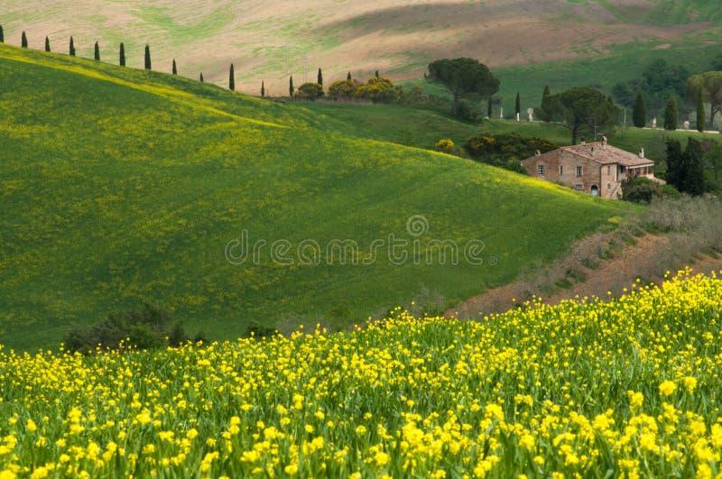 τοπίο Τοσκάνη της Ιταλίας Όμορφη πράσινη επαρχία τομέων στοκ εικόνες με δικαίωμα ελεύθερης χρήσης