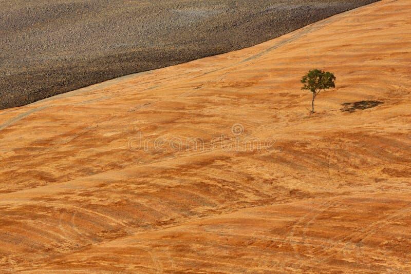 τοπίο Τοσκάνη στοκ φωτογραφίες με δικαίωμα ελεύθερης χρήσης