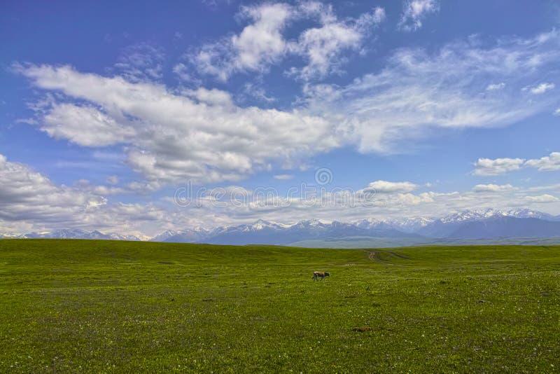 Τοπίο του λιβαδιού Kalajun στοκ φωτογραφία με δικαίωμα ελεύθερης χρήσης