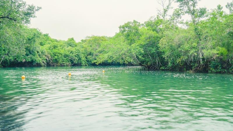 Τοπίο του πράσινων νερού και του δάσους γύρω από τον ποταμό Formoso στη Boni στοκ φωτογραφία με δικαίωμα ελεύθερης χρήσης