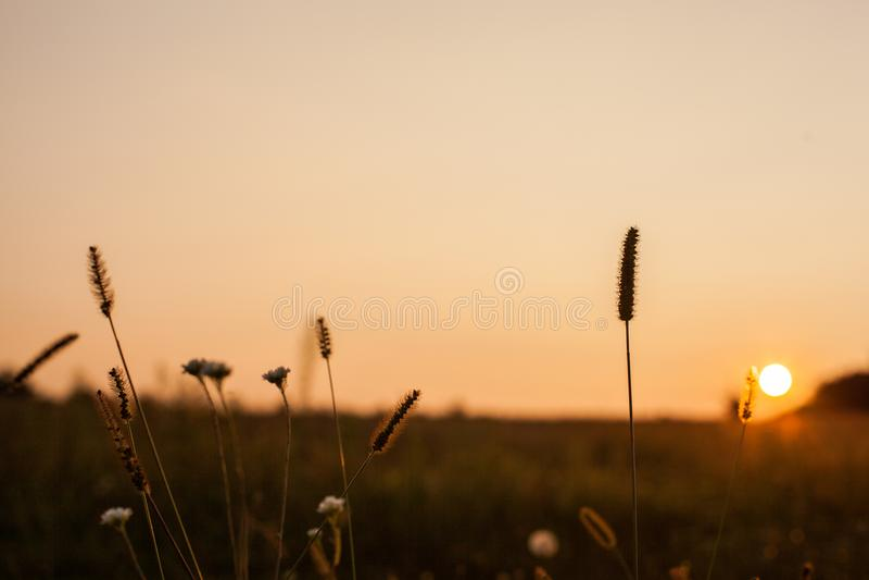 Τοπίο του τομέα στο ηλιοβασίλεμα στοκ φωτογραφίες με δικαίωμα ελεύθερης χρήσης