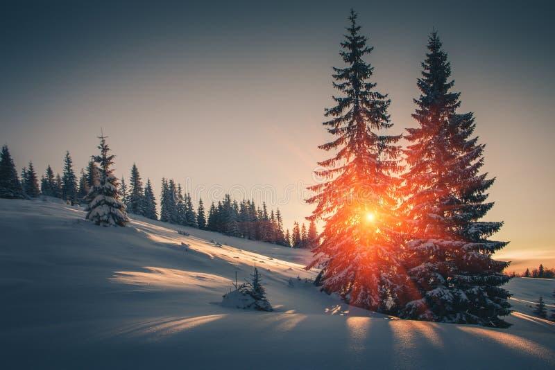 Τοπίο του χειμώνα βουνών Άποψη των χιονισμένων δέντρων κωνοφόρων στην ανατολή αναδρομικό φίλτρο στοκ εικόνες με δικαίωμα ελεύθερης χρήσης