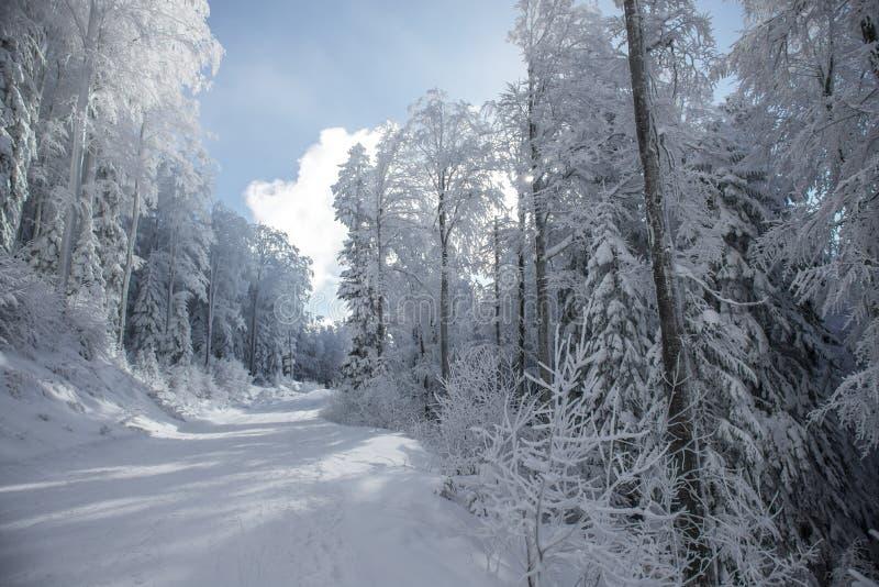 Τοπίο του χιονώδους δάσους στην ηλιόλουστη ημέρα στοκ φωτογραφίες με δικαίωμα ελεύθερης χρήσης
