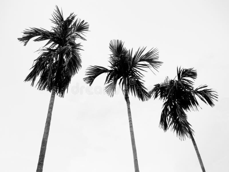 τοπίο τροπικό στοκ φωτογραφίες