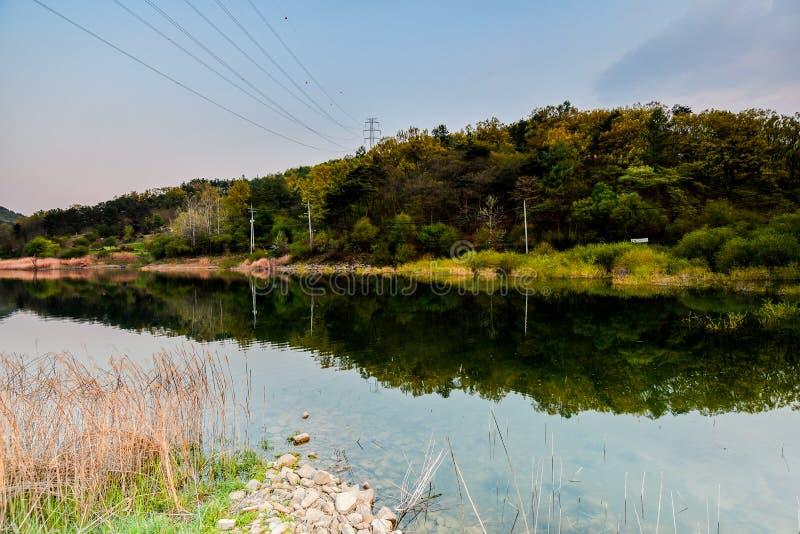 Τοπίο των δέντρων και των Μπους στην ακτή της λίμνης χωρών στοκ εικόνα