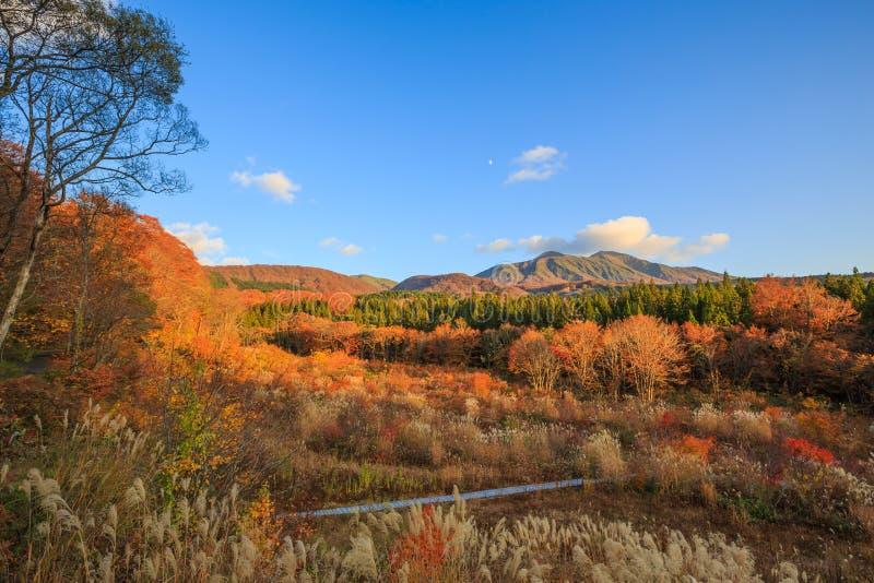 Τοπίο των δέντρων που γυρίζουν το χρώμα το φθινόπωρο με το υψηλό βουνό - Senboku, Akita, Ιαπωνία στοκ εικόνα με δικαίωμα ελεύθερης χρήσης