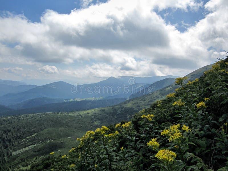 τοπίο των Καρπάθιων βουνών, ανατολή στο βουνό στοκ φωτογραφίες με δικαίωμα ελεύθερης χρήσης