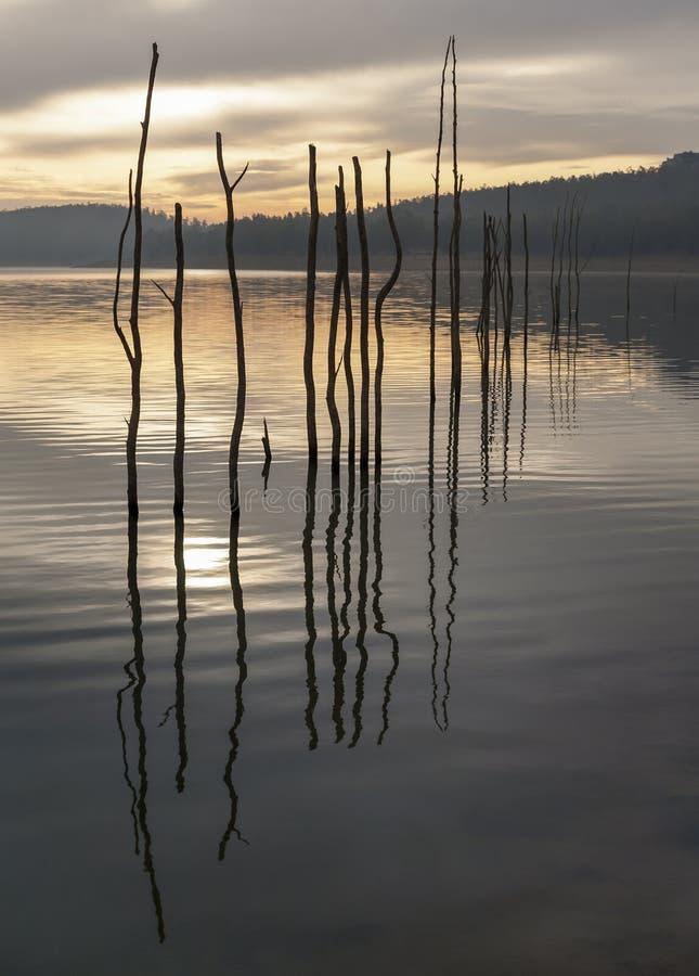 Τοπίο των ξηρών δέντρων σε μια λίμνη στην ανατολή Αντανάκλαση στοκ εικόνες
