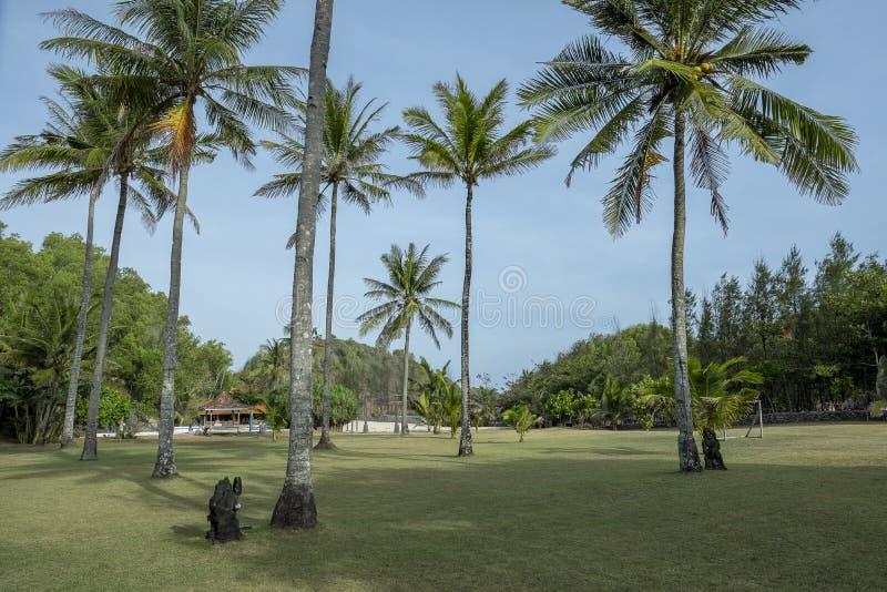Τοπίο των πράσινων δέντρων τομέων και καρύδων χλόης στοκ φωτογραφία με δικαίωμα ελεύθερης χρήσης