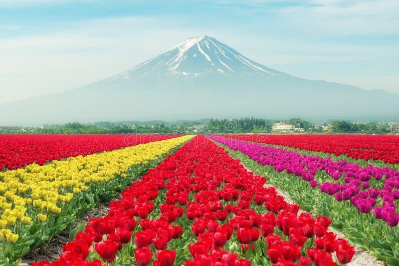 Τοπίο των τουλιπών της Ιαπωνίας με την ΑΜ fuji ζωηρόχρωμες τουλίπες στοκ εικόνες