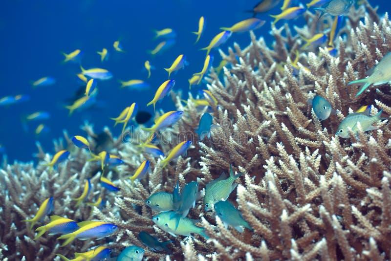 τοπίο υποβρύχιο στοκ εικόνες