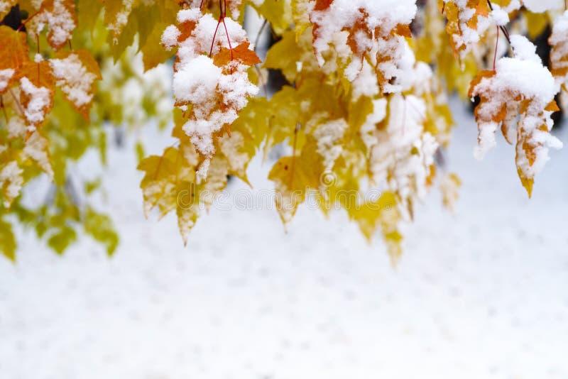 Τοπίο φθινοπώρου: Δέντρο Branche με τα χρυσά και πορτοκαλιά φύλλα στα τέλη του φθινοπώρου που καλύπτεται από το πρώτο χιόνι Κενό  στοκ φωτογραφίες
