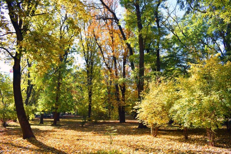 Τοπίο φθινοπώρου Κίτρινα, πράσινα και πορτοκαλιά φύλλα στοκ εικόνα