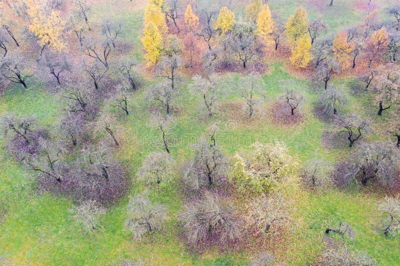 Τοπίο φθινοπώρου με τα γυμνά δέντρα μηλιάς στον οπωρώνα το ομιχλώδες αγροτικό s στοκ εικόνες με δικαίωμα ελεύθερης χρήσης