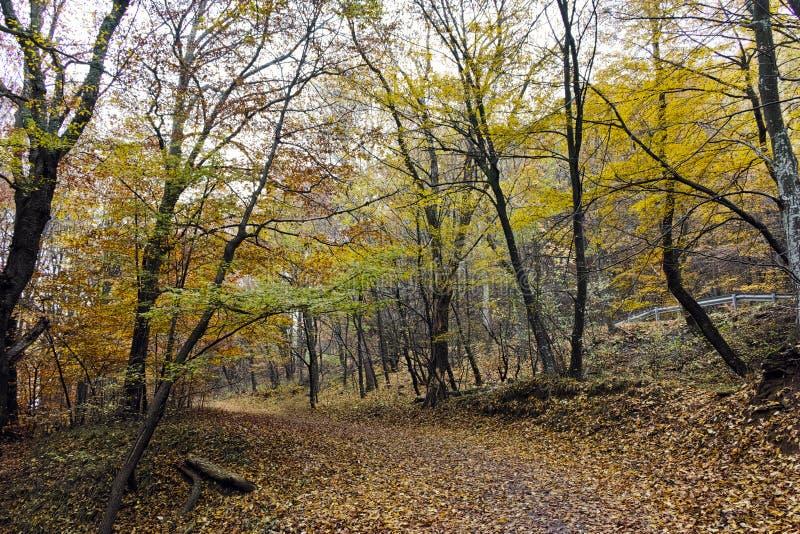 Τοπίο φθινοπώρου με τα κίτρινα δέντρα, Vitosha βουνό, Βουλγαρία στοκ φωτογραφίες