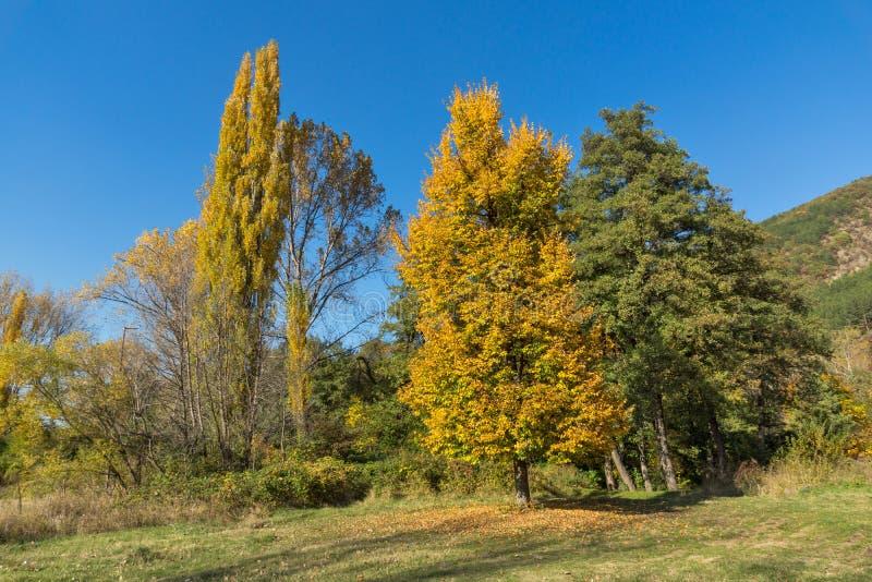 Τοπίο φθινοπώρου με το κίτρινο δέντρο κοντά στη λίμνη Pancharevo, περιοχή πόλεων της Sofia, της Βουλγαρίας στοκ φωτογραφίες με δικαίωμα ελεύθερης χρήσης