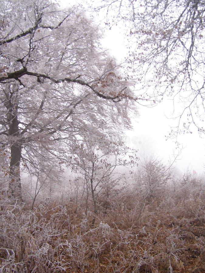 τοπίο φθινοπώρου πρόσφατ&omicro στοκ εικόνες