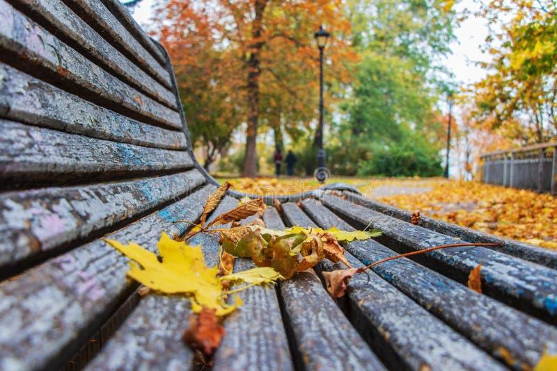 Τοπίο φθινοπώρου στο πάρκο πόλεων των κίτρινων φύλλων στον πάγκο για το υπόλοιπο στοκ εικόνες με δικαίωμα ελεύθερης χρήσης