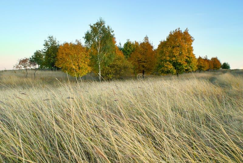 Τοπίο φθινοπώρου το άλσος και το λιβάδι στοκ εικόνες