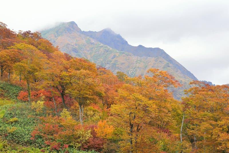 Τοπίο φθινοπώρου των δονούμενων ζωηρόχρωμων δέντρων με τις σειρές βουνών στοκ εικόνα με δικαίωμα ελεύθερης χρήσης