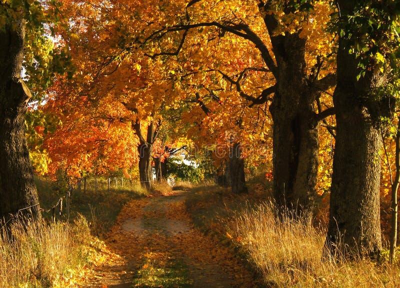 Download τοπίο φθινοπώρου στοκ εικόνα. εικόνα από νεράιδα, φύλλα - 1536583