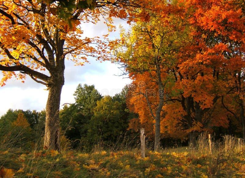 Download τοπίο φθινοπώρου στοκ εικόνα. εικόνα από φωτισμός, οικολογία - 1536593