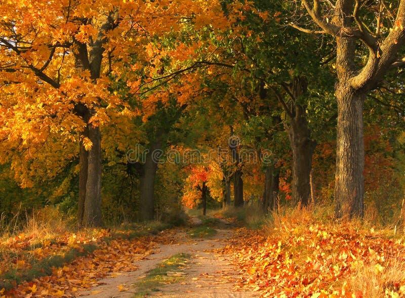 Download τοπίο φθινοπώρου στοκ εικόνες. εικόνα από τοπίο, φρέσκος - 1536636
