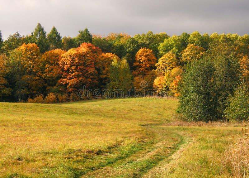 Download τοπίο φθινοπώρου στοκ εικόνες. εικόνα από φύλλο, διακλαδιμένος - 1536674
