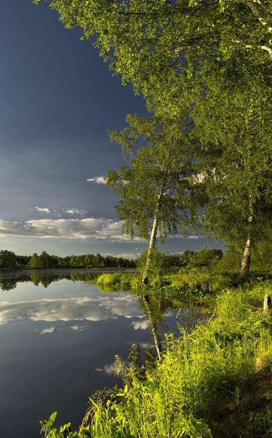 τοπίο φυσικό Η χλόη, τα δέντρα στην ακτή μιας λίμνης ή ενός ποταμού Δεξαμενές στις άγρια περιοχές στοκ φωτογραφία με δικαίωμα ελεύθερης χρήσης